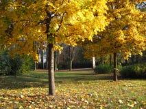 Arbres jaunes en automne Photos libres de droits