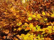 Arbres jaunes en automne Photographie stock libre de droits