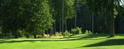 Arbres jouants au golf de vert de cours de golf photos stock