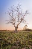 Arbres légers de silhouette Photo libre de droits