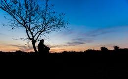 Arbres légers de silhouette Photographie stock