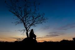 Arbres légers de silhouette Image stock