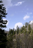 Arbres latéraux de montagne Image libre de droits