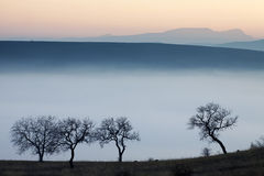 Arbres le jour brumeux d'automne Photographie stock libre de droits