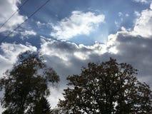 Arbres, le soleil par les nuages bleu-gris Photographie stock