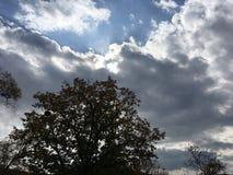 Arbres, le soleil par les nuages bleu-gris Photo stock