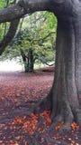 Arbres le Sussex d'automne Photos libres de droits