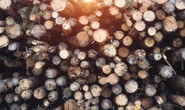Arbres malades tombés du scarabée d'écorce, combattant le parasite de forêt avec le scarabée d'écorce photographie stock