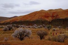 Arbres, montagnes Photo libre de droits