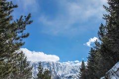 arbres, montagnes et brume Images stock