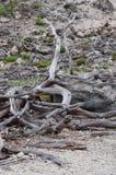 Arbres morts Photo libre de droits