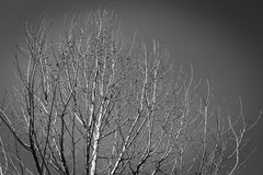 Arbres morts image stock