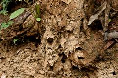 Arbres morts Photos stock