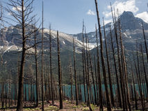 Arbres morts au lac de montagne Photographie stock libre de droits