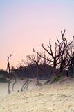 Arbres morts au lever de soleil. Image libre de droits