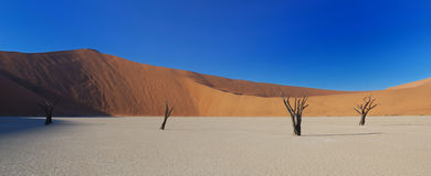 Arbres morts dans Deadvlei Photos stock