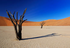 Arbres morts dans Deadvlei Photo stock