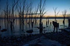 Arbres morts dans la ville abandonnée d'Epecuen Femme photographiant le coucher du soleil au lac images libres de droits
