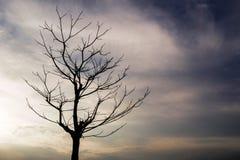 Arbres morts dans le ciel de soirée images libres de droits