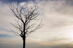 Arbres morts dans le ciel nocturne avec des nuages dans la lumière molle photographie stock libre de droits
