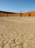 Arbres morts dans le désert namibien Photo libre de droits