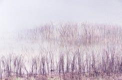 Arbres morts dans le lac Photos stock
