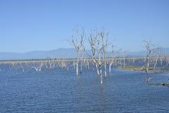 Arbres morts dans le lac photo libre de droits