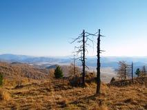 Arbres morts dans les montagnes Images stock