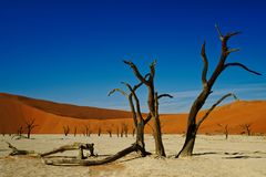Arbres morts de Deadvlei Namibie, couleurs vives photographie stock