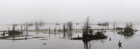 Arbres morts de delta brumeux blanc à marée basse photographie stock libre de droits