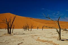 Arbres morts, Deadvlei, Namibie photographie stock libre de droits