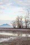 Arbres morts en plage à marée basse Photographie stock libre de droits