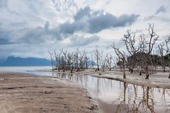 Arbres morts en plage à marée basse image stock