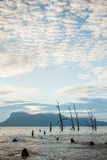 Arbres morts et plage boueuse au coucher du soleil Photo stock