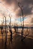 Arbres morts et plage boueuse au coucher du soleil Image stock