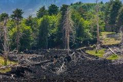 Arbres morts et un écoulement de lave près de volcan l'Etna sur la Sicile Image libre de droits