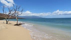 2 arbres morts par l'océan Photographie stock