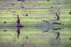 Arbres morts sur la banque de la rivière Image stock