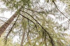 Arbres moussus dans la forêt humide et brumeuse Photographie stock