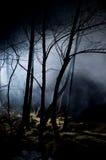 Arbres mystérieux dans une forêt hantée Image libre de droits