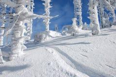 arbres neigeux Photos stock