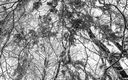 Arbres neigeux blancs noirs abstraits d'hiver Image libre de droits