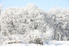Arbres neigeux de l'hiver Photo libre de droits
