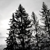 Arbres noirs Photographie stock libre de droits