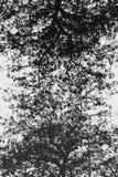 Arbres noirs et blancs abstraits d'arbres Photo libre de droits