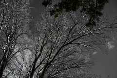 Arbres noirs et blancs, ciel bleu Photos stock