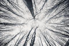 Arbres noirs et blancs d'hiver du fisheye d Image libre de droits