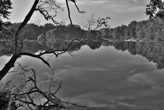 Arbres noirs et blancs par la rivière Images stock