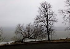 Arbres nus avec des branches de fractale dans un environnement et une rue froids de lac d'hiver photos stock