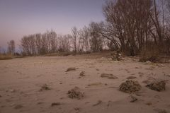 Arbres nus d'automne sur le rivage arénacé au coucher du soleil photo stock